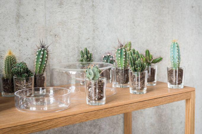 FRETZ, Exklusive Wohnaccessoirs, Schönbuch Glasschalen, wide