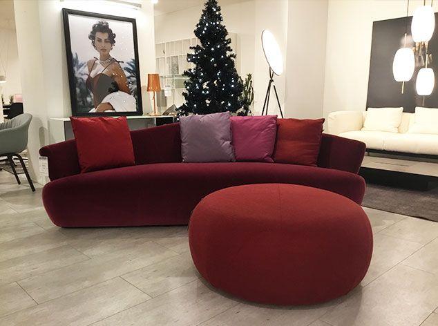 Sofa, Solemyidae, giorgetti